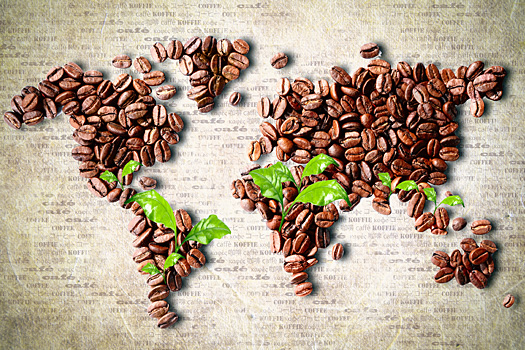 Caffè Arabica, Robusta, Giamaica